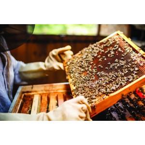 Fabrication du Miel de Provence