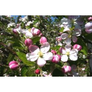 Des jus et des nectars nés en 1992 au cœur des vergers et potagers de Provence.