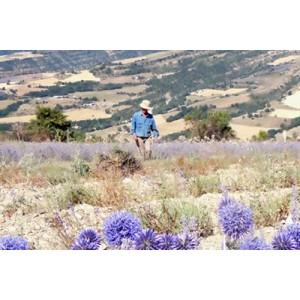 Dans une exploitation familiale, la distillerie du Siron se situe au cœur des Alpes de Haute-Provence, sur les hauteurs du village de Thoard.