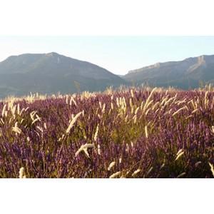 Les produits emblématiques de Provence sont issus de l'agriculture biologique, et offrent une multitude de bienfaits.