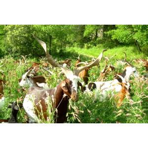 Le Fromage de Chèvre de Mimet, Provence