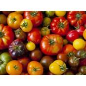 Tomates anciennes mélanges sachet de 1 Kg (Marmande, Zebra, noir de crimée,cœur de bœuf, en fonction de la récolte)