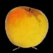 Pommes jaune BIO OPALE (1Kg environ)