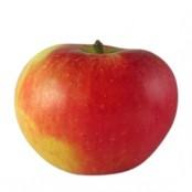 Pommes bicolores Elstar BIO sachet de 1Kg